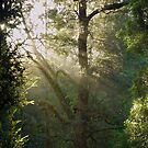 Tarkine Forest 1 by Andrew Smyth