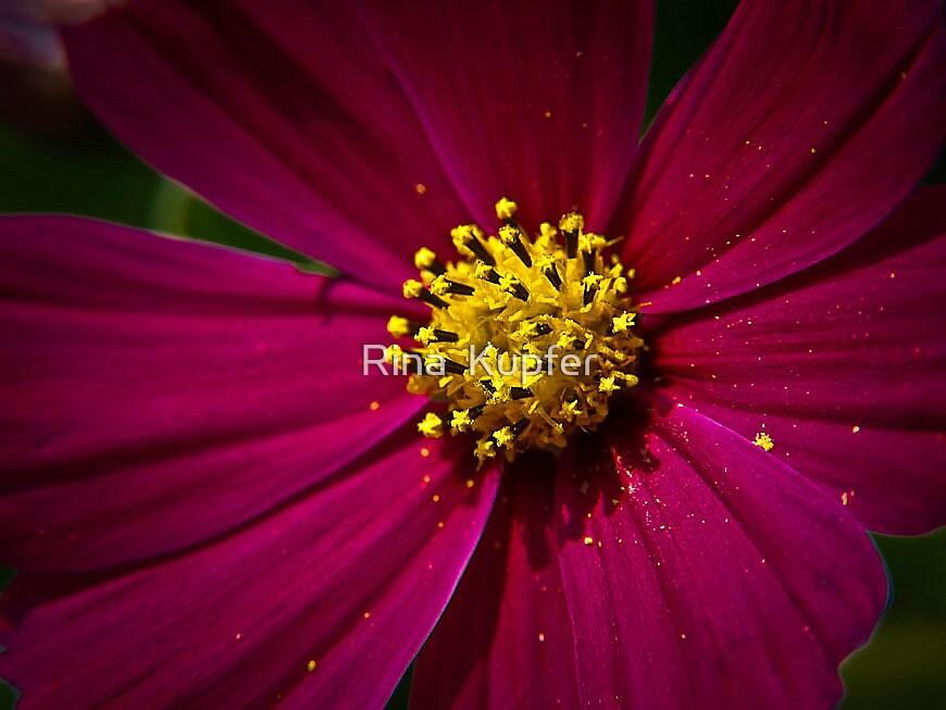 Pink by Rina  Kupfer