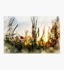 A small magical world painted Photographic Print
