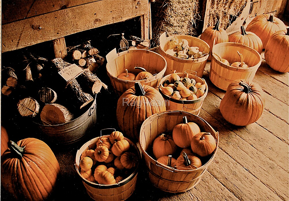 Vermont Pumpkins by Ray4cam