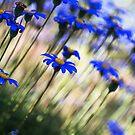 Beautiful Dancing Blue Flowers by Joy Watson