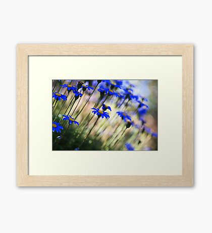 Beautiful Dancing Blue Flowers Framed Print