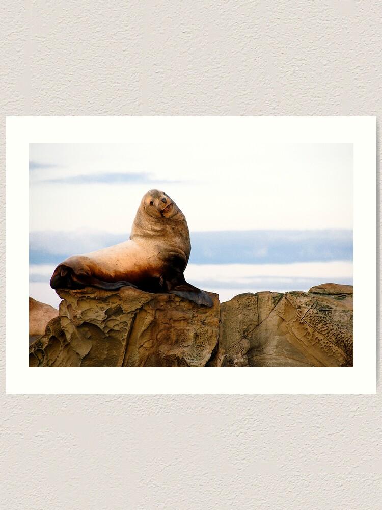Alternate view of Proud Sea Lion Art Print
