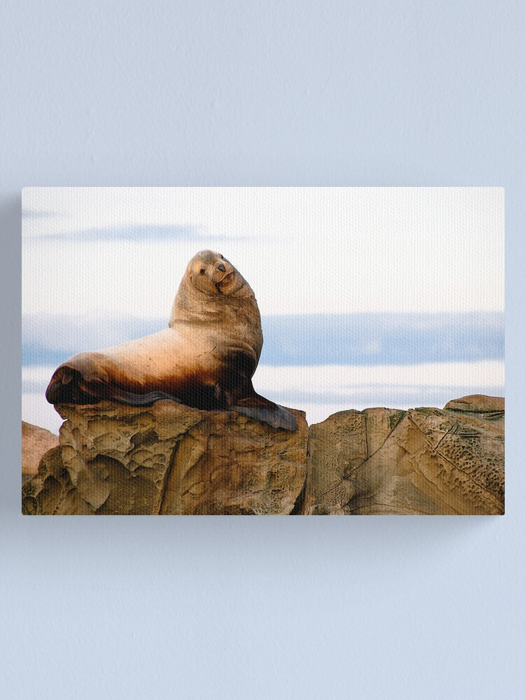 Alternate view of Proud Sea Lion Canvas Print