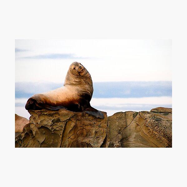 Proud Sea Lion Photographic Print