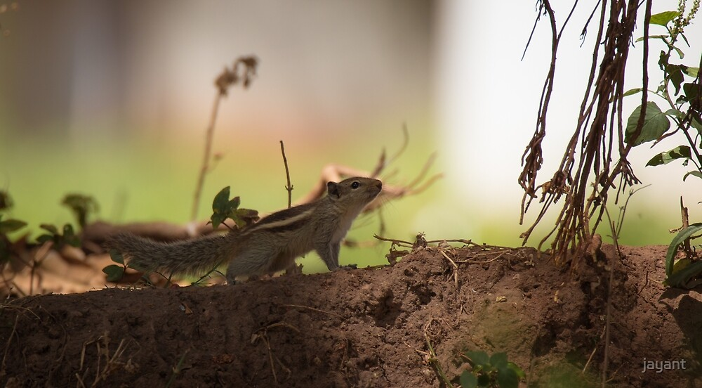 Curious by jayant