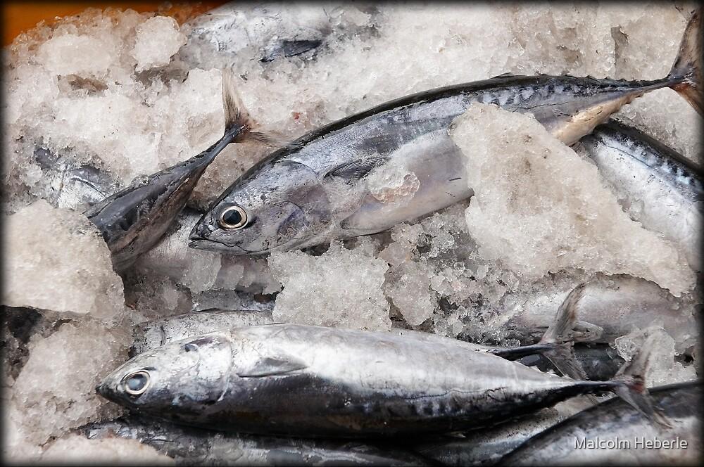 Fishmarket #2 - Hoi An - Vietnam by Malcolm Heberle