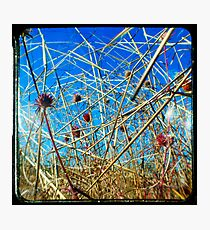 Red in the Blue Photographic Print