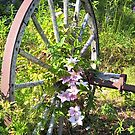 Clematis Wheel by Martha Medford