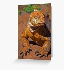 Ecuador. Galapagos Islands. Galapagos Land Iguana. Smile. Greeting Card