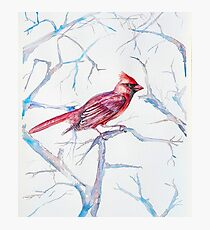 Northern Red Cardinal Photographic Print