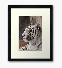 Rare White Tiger - Natural Animal Print Framed Print