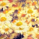 Gathering of Yellow Daisies by heidiannemorris