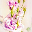 Romantic Softness by Kasia-D