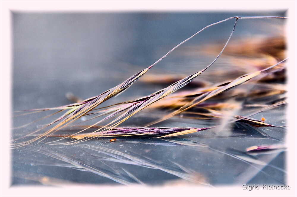 Just barley by Sigrid  Kleinecke