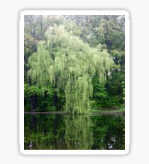 Willow Tree Of Serenity Sticker