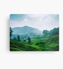 Tea Plantation, Malaysia. Metal Print