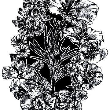 California Wildflowers by mayavavra