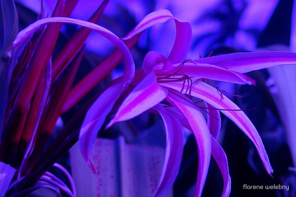 Lily Lavendar by florene welebny