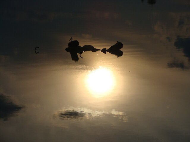 sun reflection by Jessica  Taylor-Cassan
