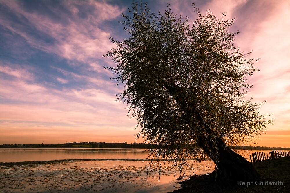Lone tree at sunset by Ralph Goldsmith