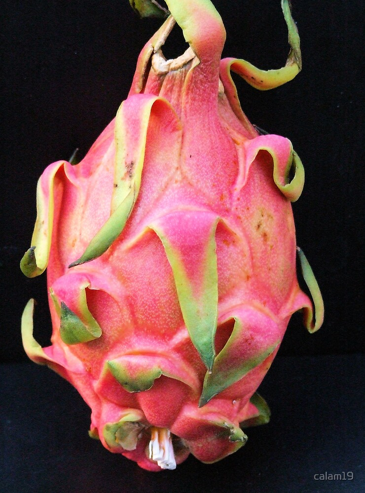 Dragon Fruit by calam19