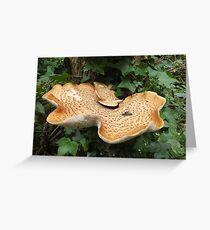 Mushroom shelf. Greeting Card