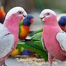 Pink Galahs by Frank Moroni