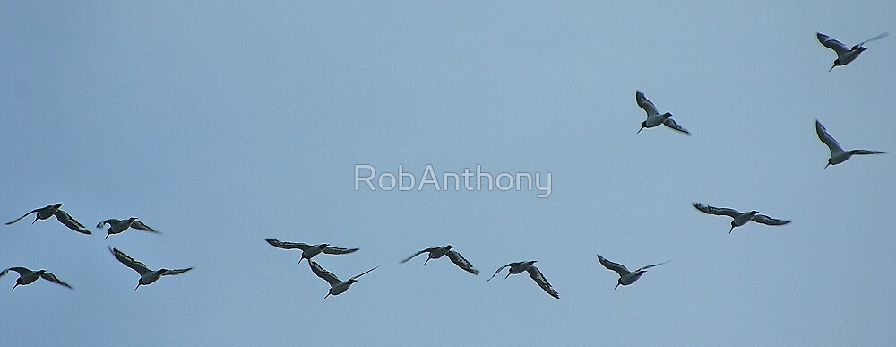 fly by by RobAnthony