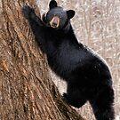 Black Bear - The Poser by akaurora