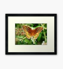 Gorgeous Orange and Black Butterfly - Macro Nature Shot Framed Print