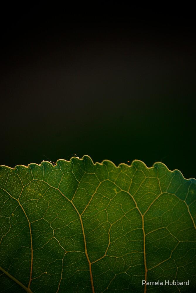 Green Border by Pamela Hubbard