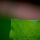 Green Corner by Pamela Hubbard