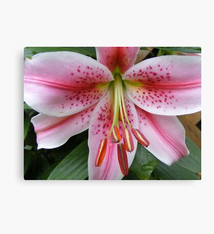 Lilly 4 Canvas Print