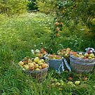 Picking Pears by George Robinson