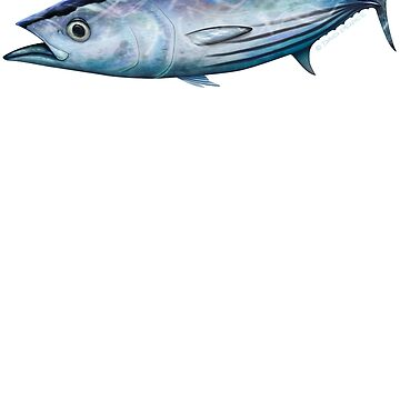 Striped tuna by barradingo