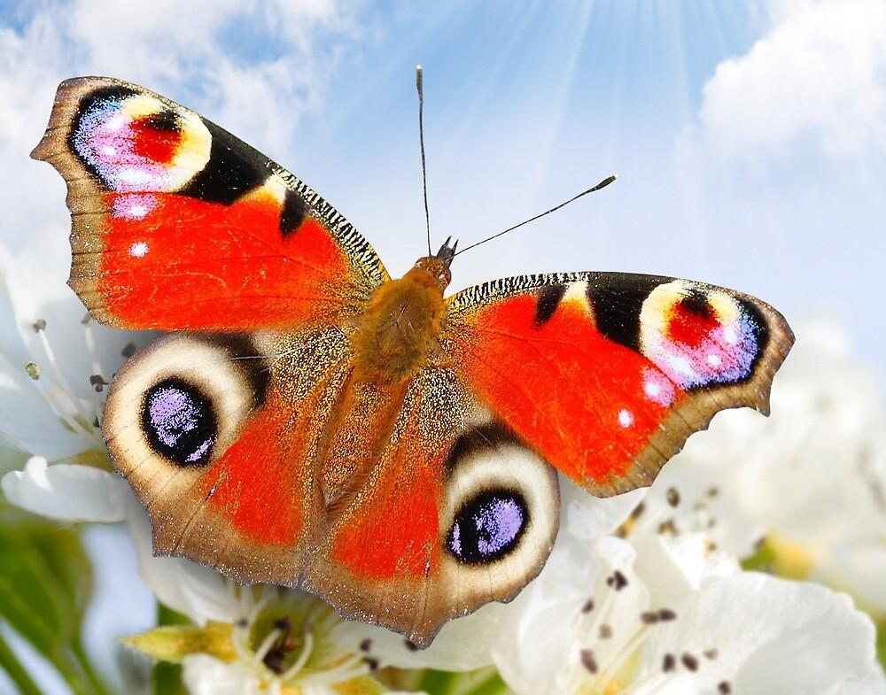 Butterfly! SALE! by Vitalia