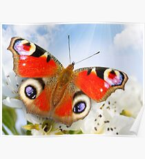 Butterfly! SALE! Poster