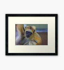 Baby howler monkey Framed Print