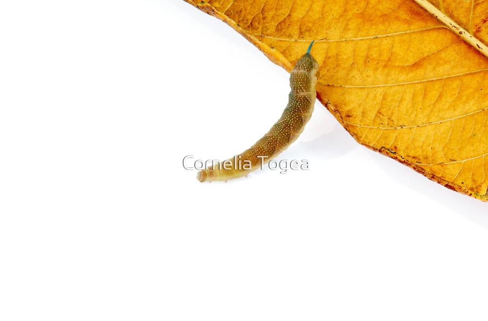 caterpillar leaf by Cornelia Togea