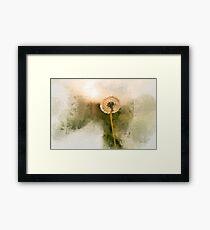 Sunny dandelion Framed Print