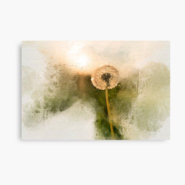 Sunny dandelion Canvas Print