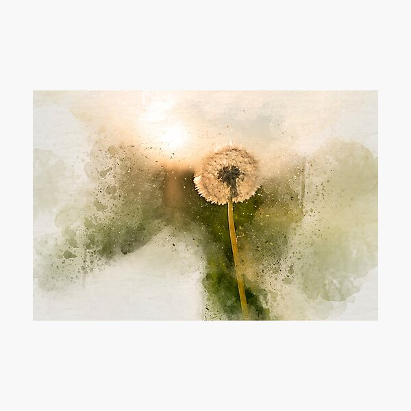 Sunny dandelion Photographic Print