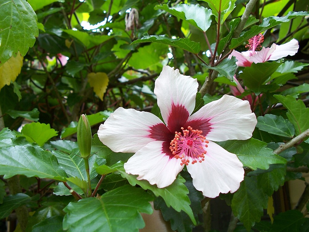 Flower in the garden by fineprint