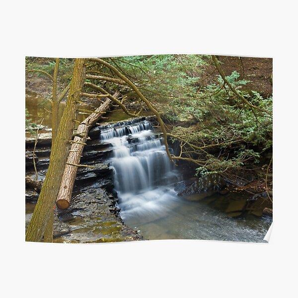 Salt Springs Waterfalls Poster