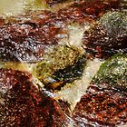 Rock Pool 2 - Mossman Gorge, Far North Queensland, Australia by Lexa Harpell