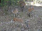Hungry Deer by Cathy Jones