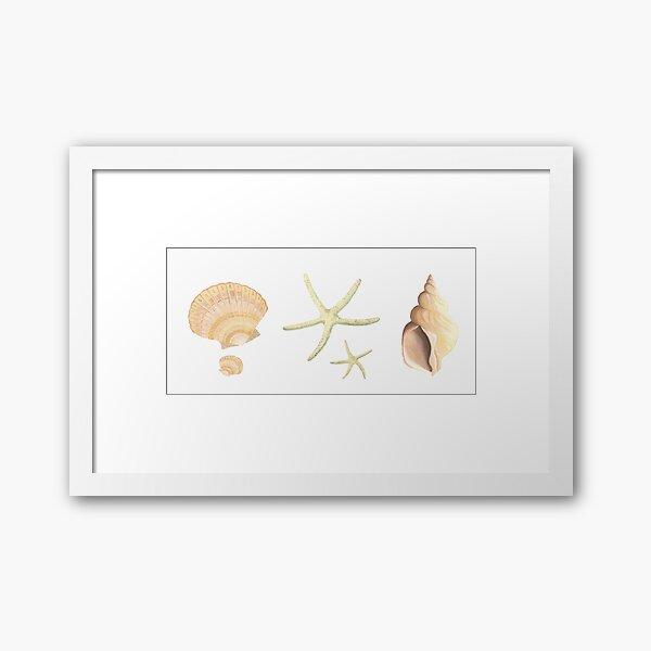 Scallop, starfish and whelk sea shells study Framed Art Print