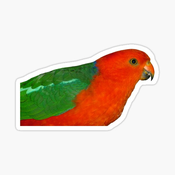 Australian King-Parrot male Sticker
