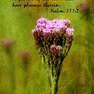 Psalm 111:2 by Jonicool